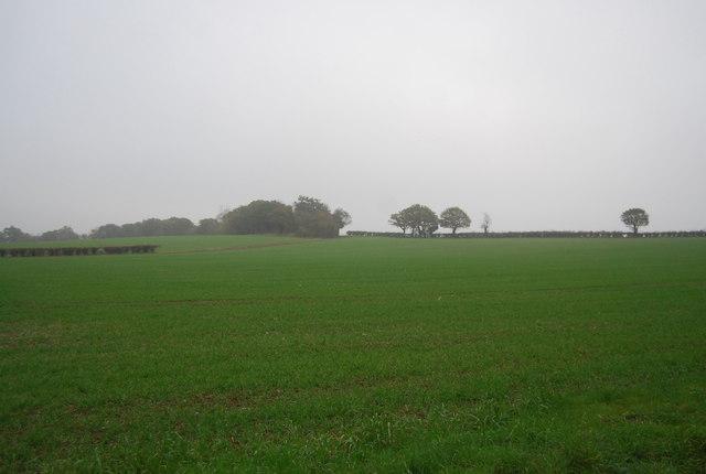 Farmland, Ridgeway Farm