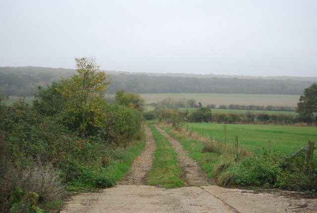 Footpath to East Blean Wood