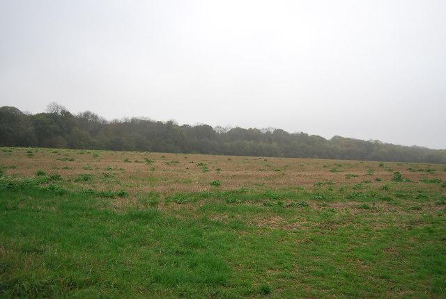 Farmland near East Blean Wood