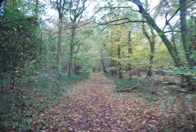 Footpath in East Blean Wood