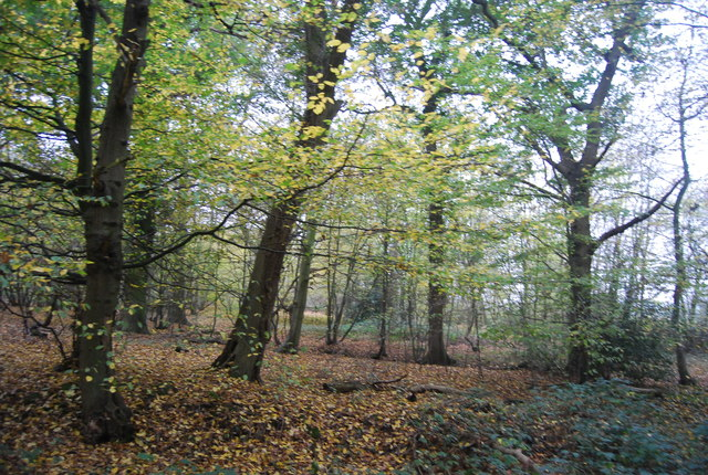 East Blean Woods