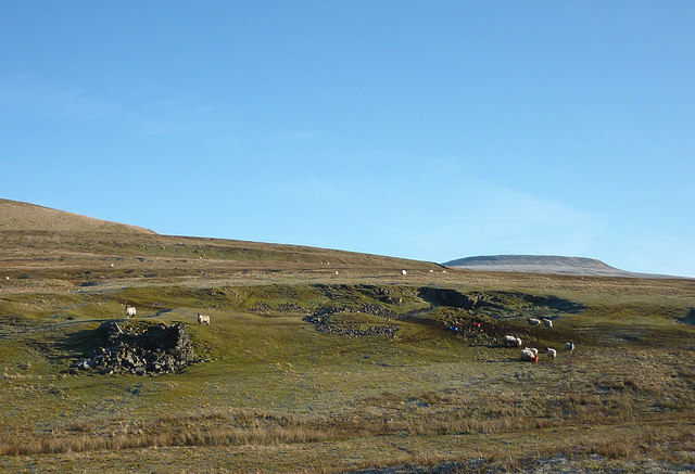 Ruined lime kiln and sheep by the Maiden Way