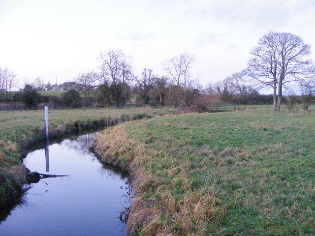 Brook Upstream