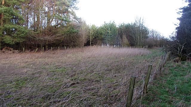 Stripwood, Hadden Rig