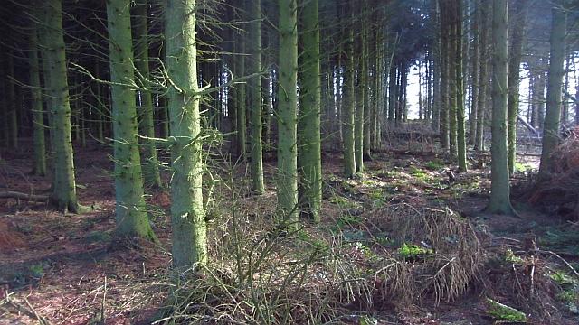 Woodland, Hadden Rig