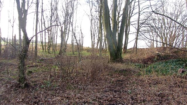 Woodland, Old Graden