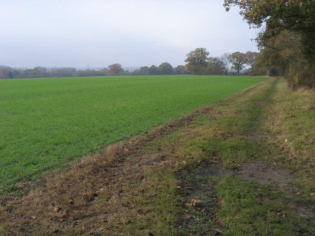 Footpath heading towards Lady Grove