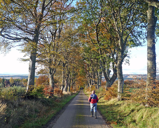 Tree-lined approach to Drumderfit Farm