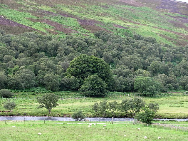 Birch woods, Strath of Kildonan