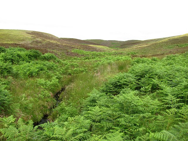 Bracken covered moorland