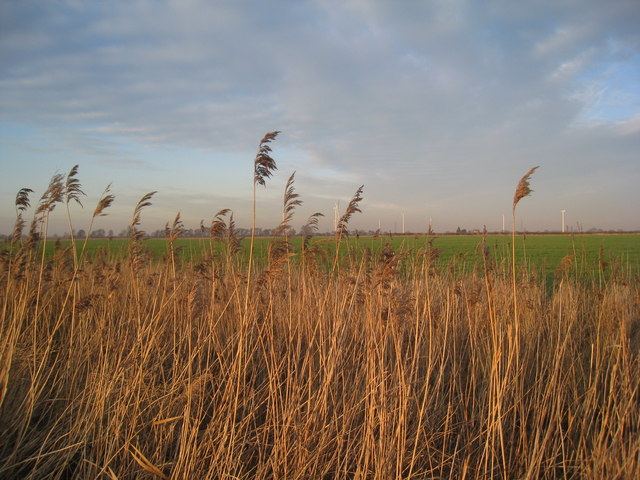 Reeds and distant wind farm