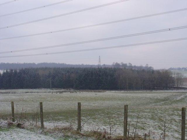 Langlands, plantation