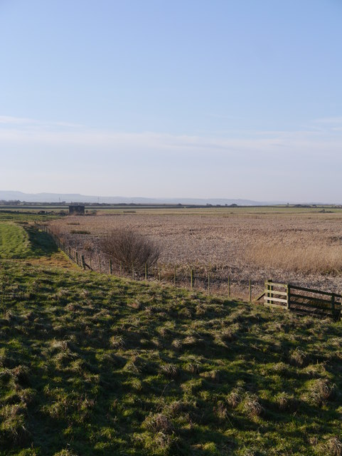 Reedbeds And Sedge At The Lough