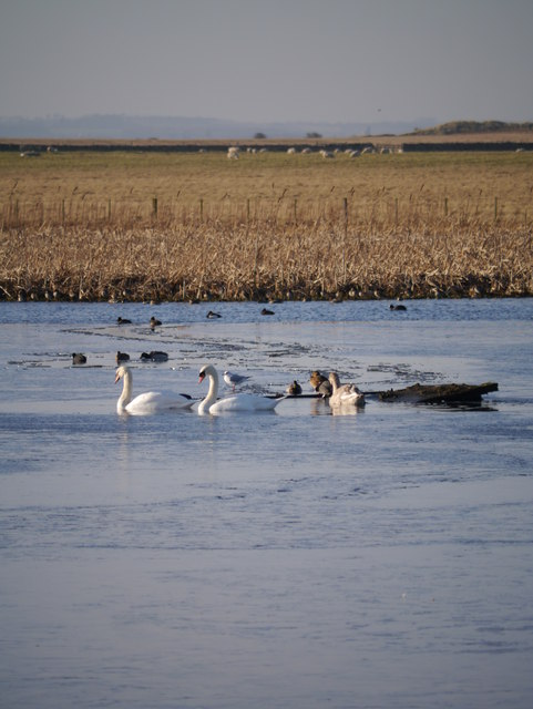 Wildfowl On The Lough