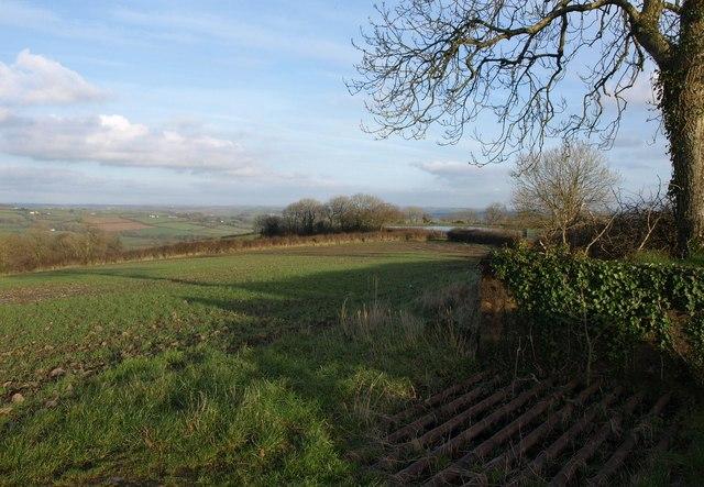 Field and trees near Penson Cross
