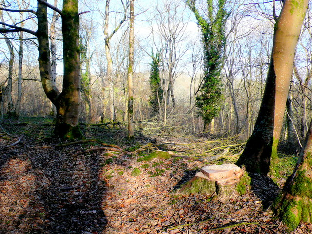 Scrub Clearance , Park wood