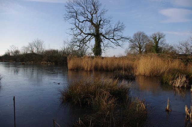 Pond at Slyne