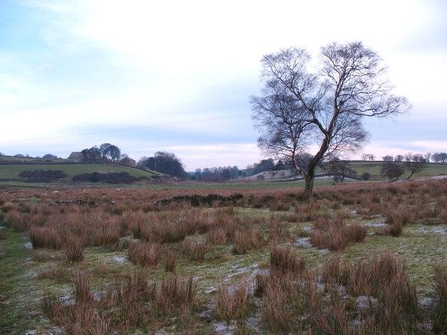 Bog trotting ahead