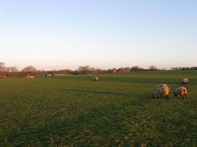 Jenkins Field (2)