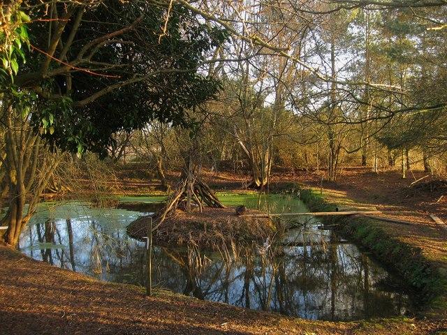 Pond, Brickfield's Farm