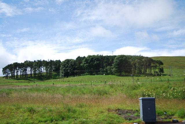 Whitrae Wood
