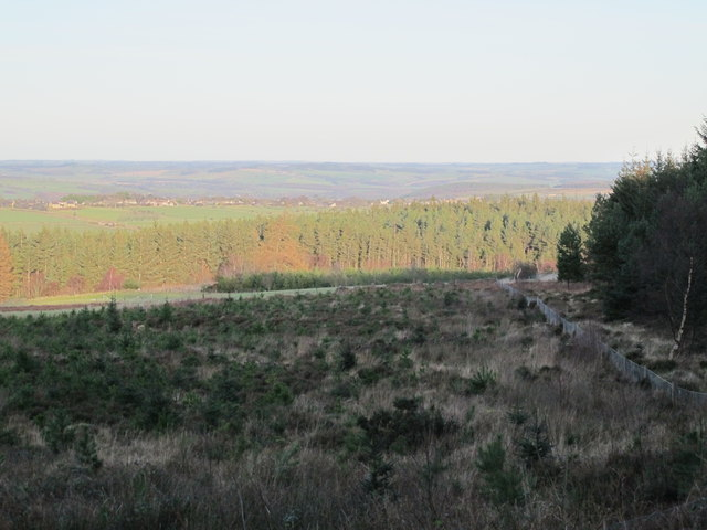 Cleared area in Slaley Forest