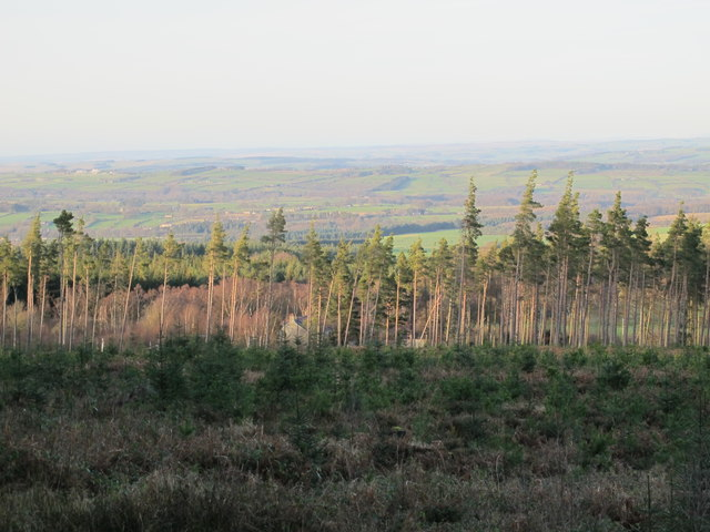 Cleared area in Slaley Forest above Spring House (2)