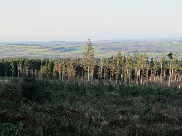 Cleared area in Slaley Forest southwest of Spring House