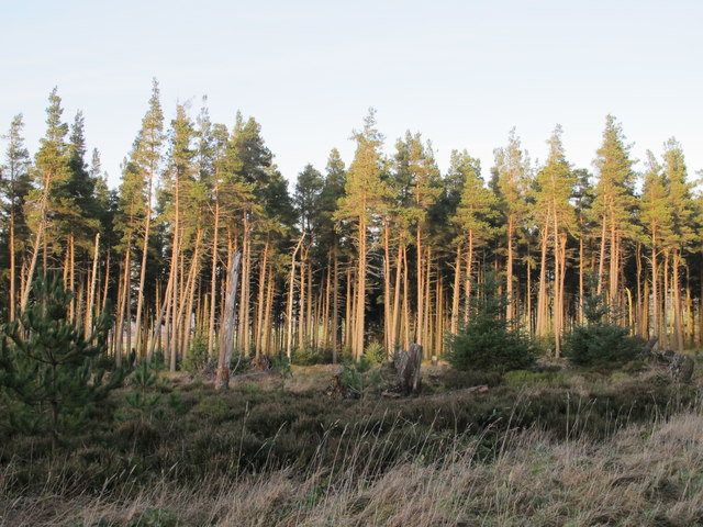 Small cleared area in Slaley Forest