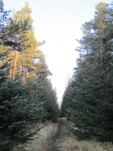 Path in Slaley Forest on Coalpits Fell