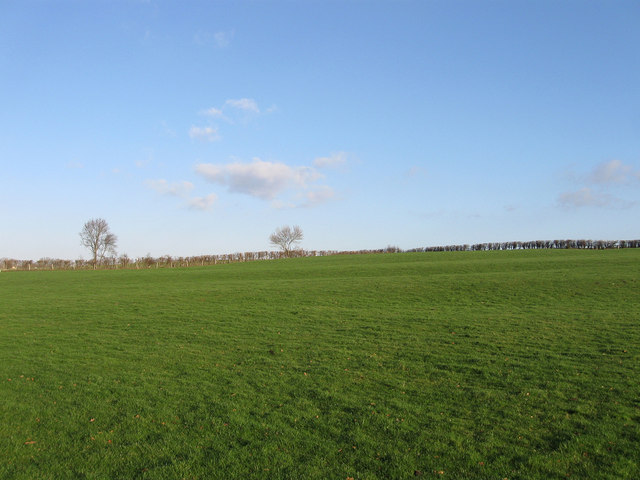 North Field (2)
