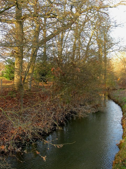 Stream, Deanland Wood