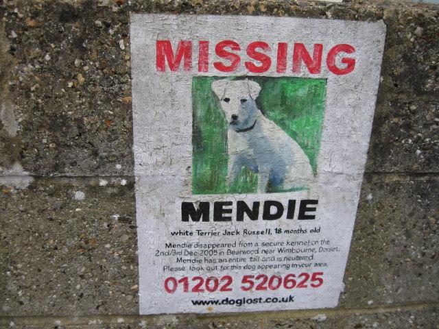Missing dog poster, Wolverton Road