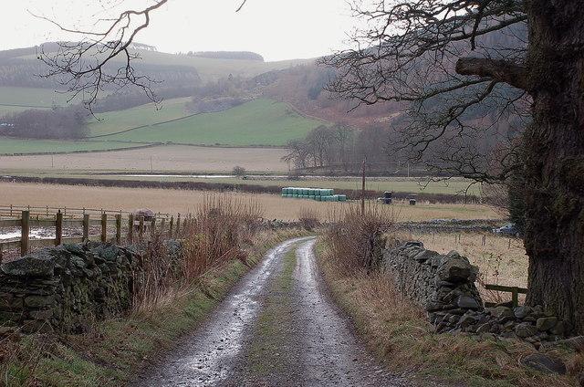 Estate track, Merrybrae