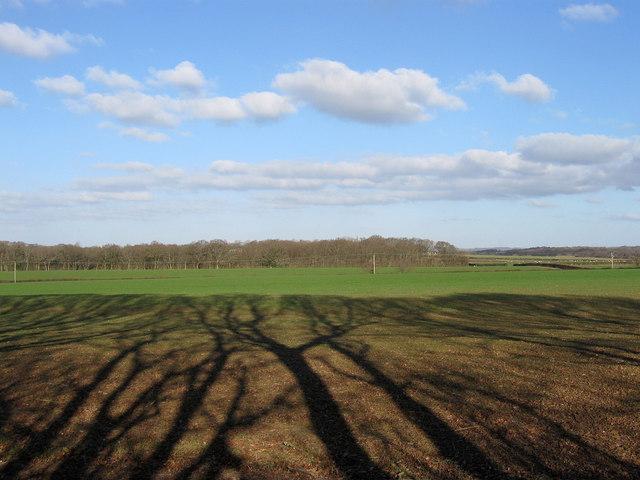 Dicker Old Field
