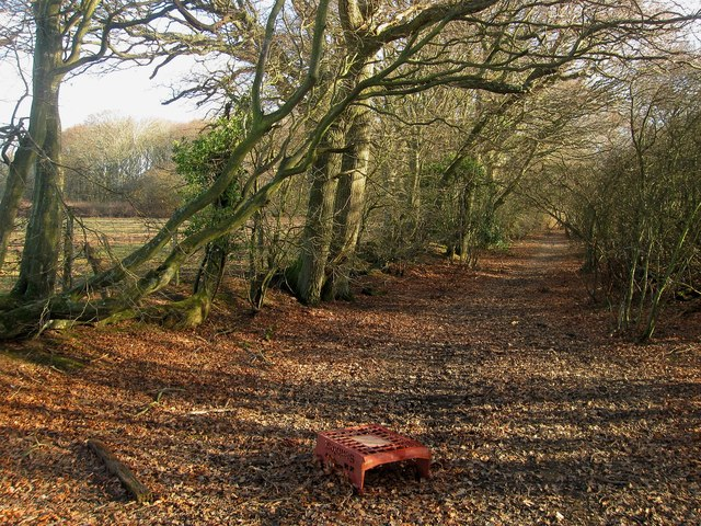 Footpath to Hackhurst Lane