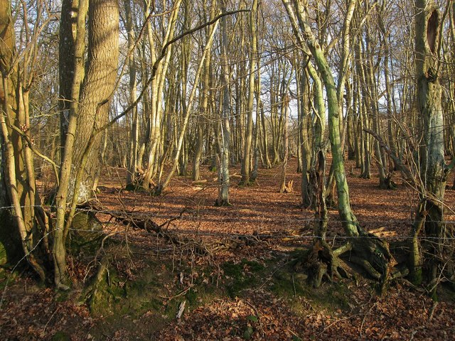 Dicker Wood
