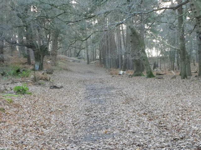 Track, Brownsea Island