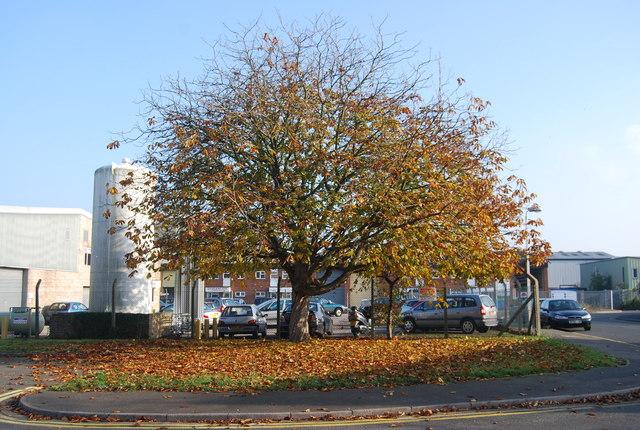 Autumnal tree, Morley Rd
