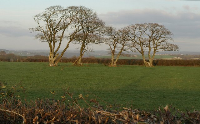 Former field boundary, Yelland