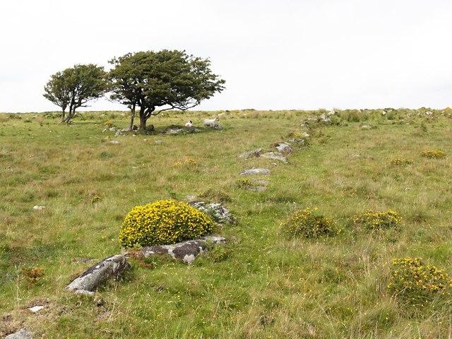 Old field boundary
