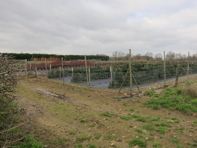 Nursery, Broad Fen Farm