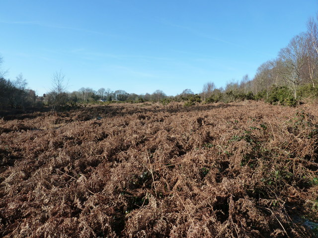 Bracken on Red House Common