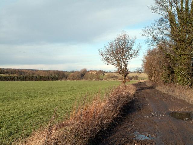 Field and farm road beside River Wear