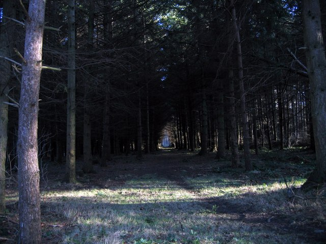 Woodland near Dye House