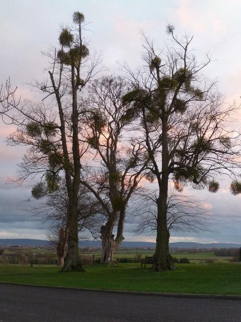 Wintery trees, Tewkesbury
