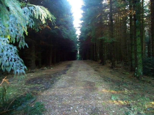 Loanfoot Plantation [5]