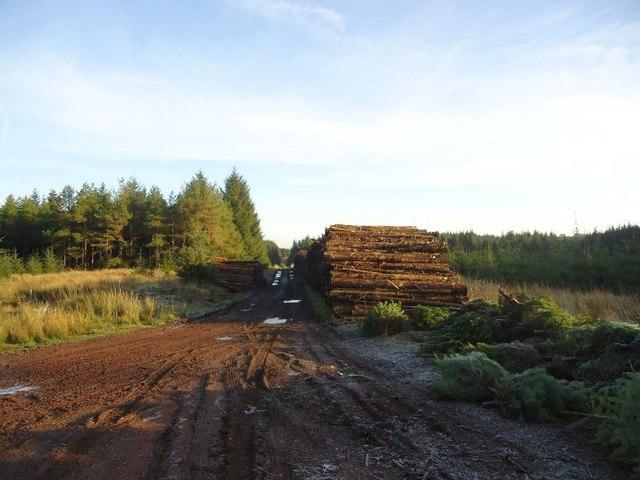 Loanfoot Plantation [6]