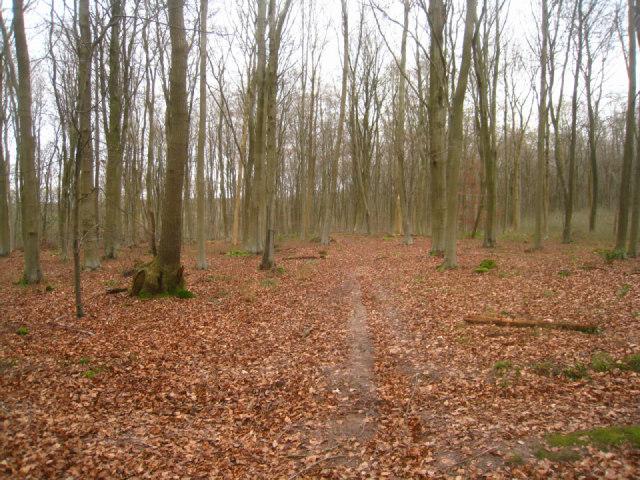 Trail in Black Wood