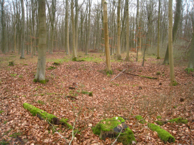 Black Wood without leaves